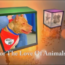 For The Love of Animals is BACK and available on YouTube!