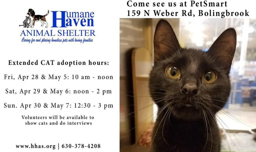 Special Extended Cat Adoption Hours! April 28, 29, 30 and May 5, 6, 7!