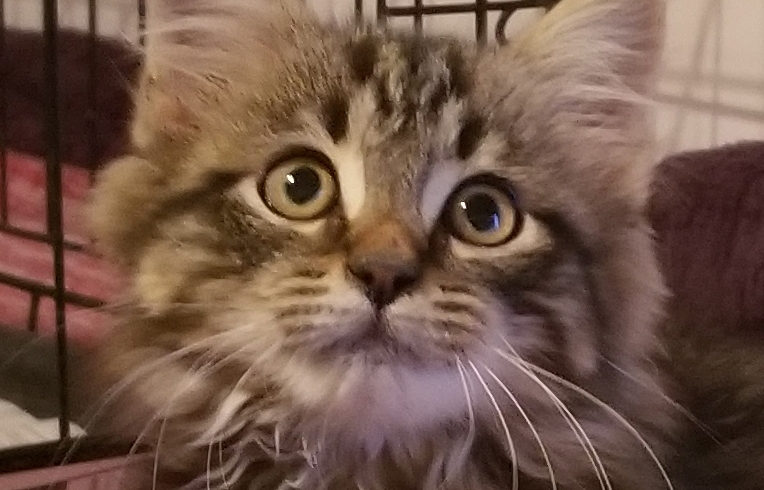 A Message from Adoptable Kitten, Zachary!